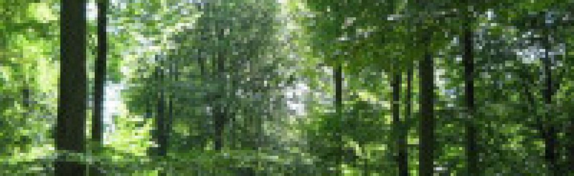 skov-125527_200x200